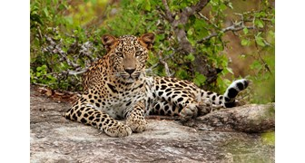 Wildlife Tour of Sri Lanka - 10 Nights