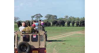 Wildlife And Sightseeing Tour - 10 Nights